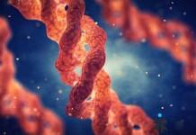 Tầm quan trọng của Collagen type 2 trong sụn khớp